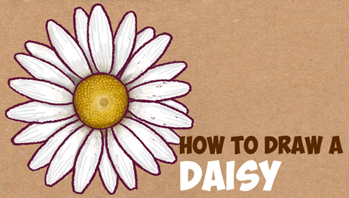 How to draw flowers archives how to draw step by step drawing how to draw a daisy flower daisies in easy step by step drawing instructions tutorial for beginners thecheapjerseys Choice Image
