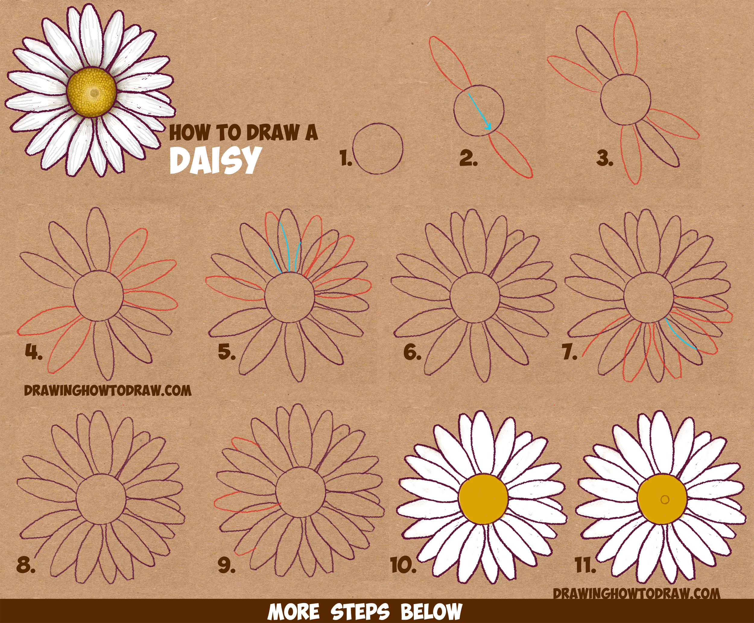 How to draw a daisy flower daisies in easy step by step for How to draw a basic flower