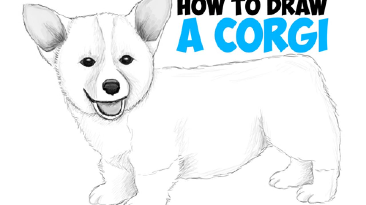 How To Draw A Corgi Puppy Easy Step By Step Realistic Drawing Tutorial For Beginners How To Draw Step By Step Drawing Tutorials