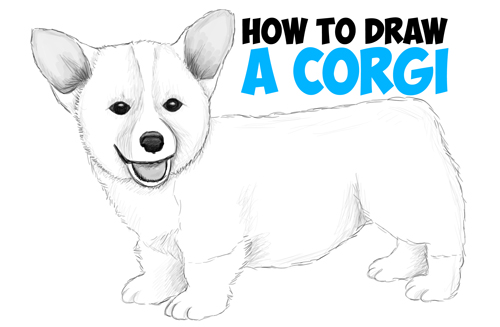 How to Draw a Corgi Puppy Easy Step by Step Realistic Drawing Tutorial for Beginners