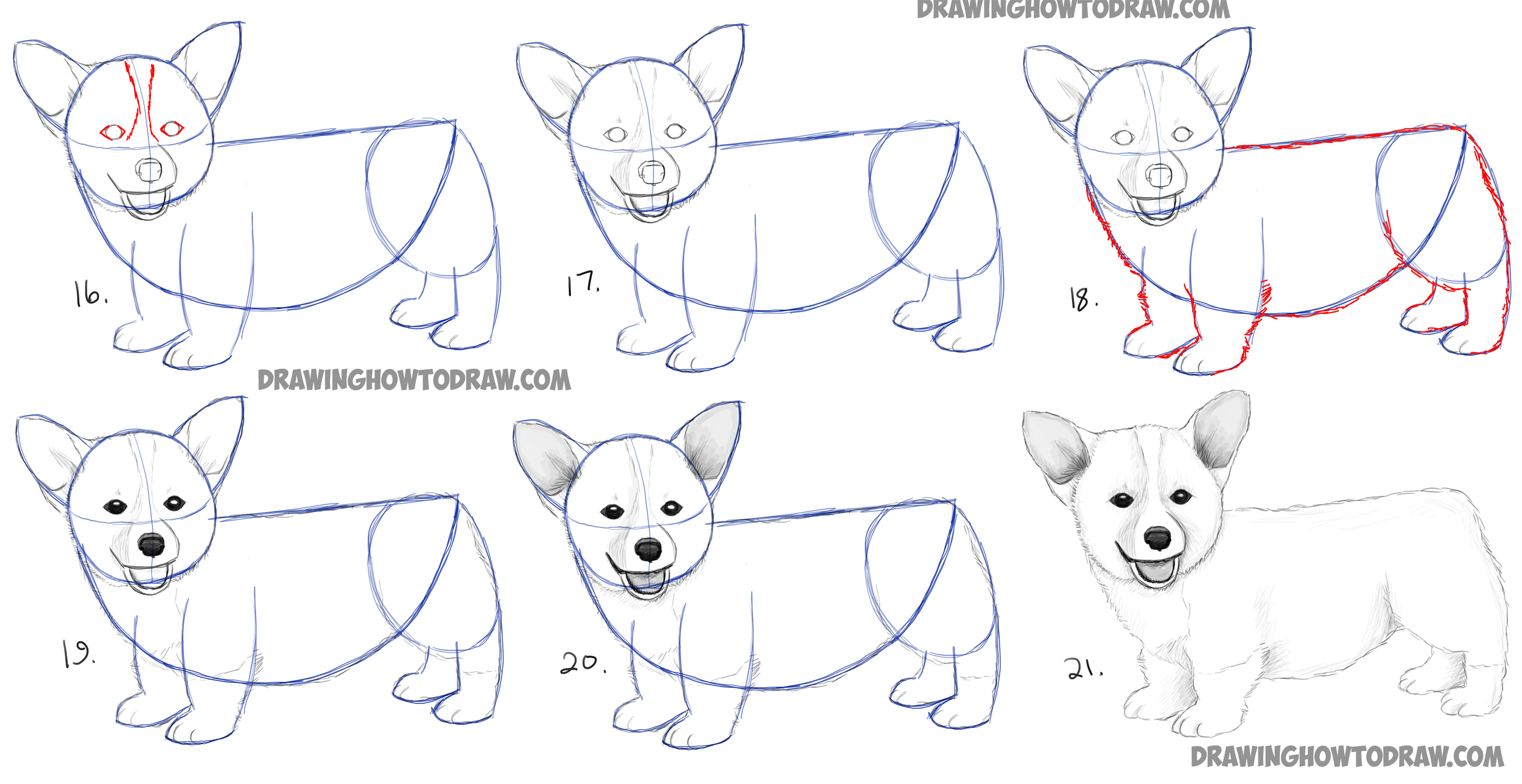 Learn how to draw a corgi puppy simple steps how to draw dogs and puppies