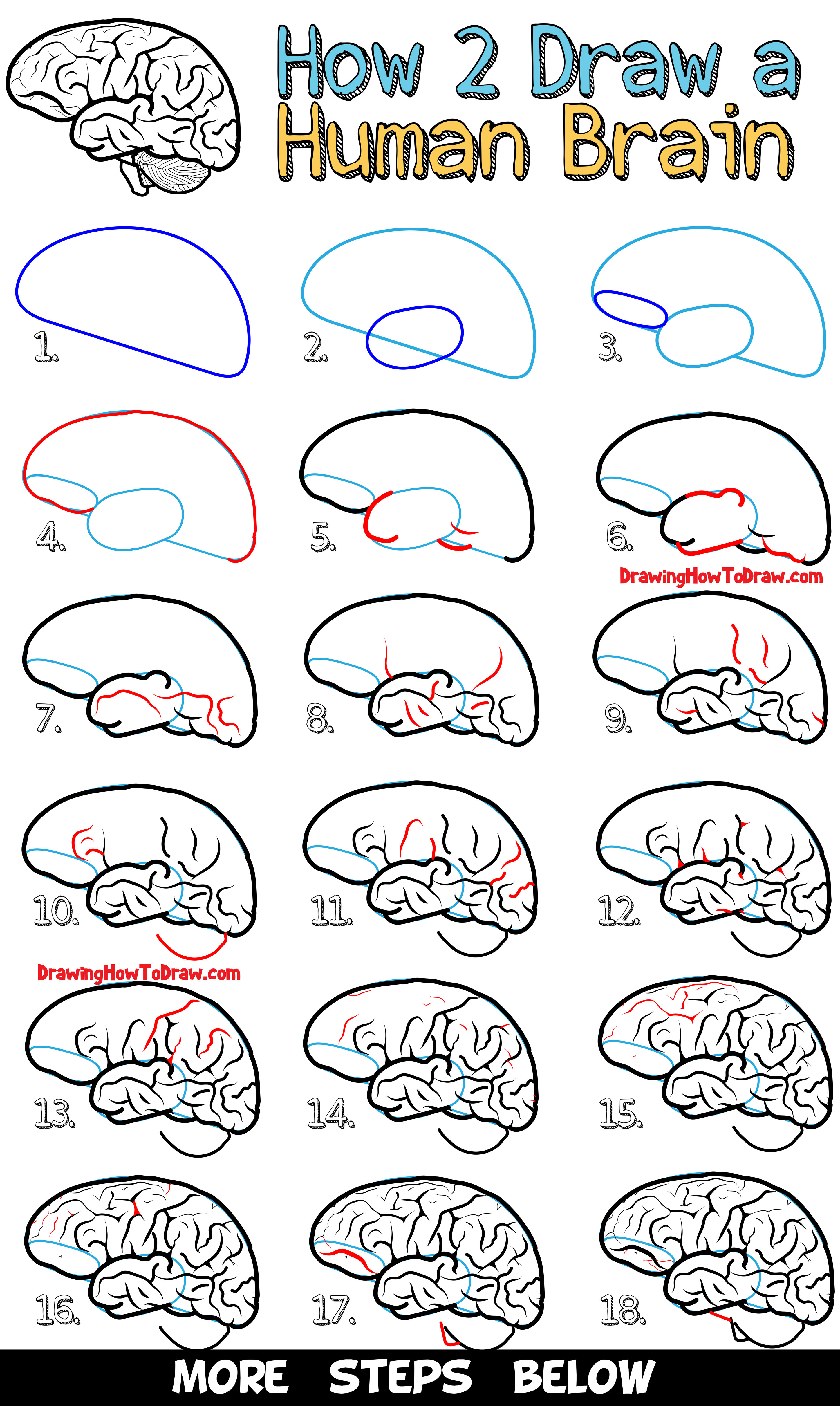 Learn How to Draw a Human Brain - Easy Steps Drawing Lesson for Beginners