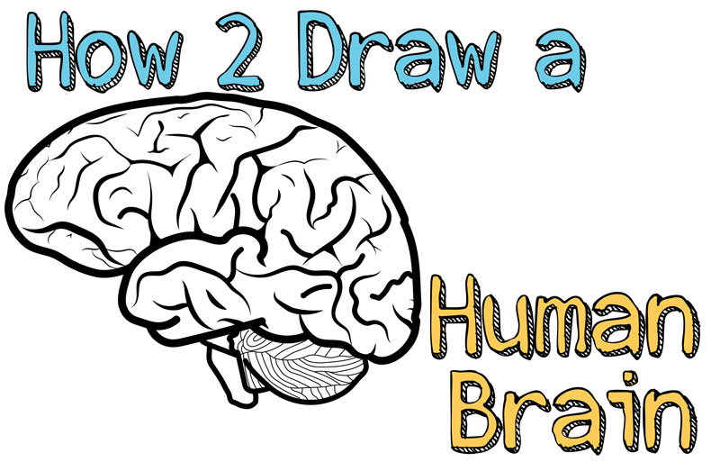 How To Draw A Human Brain Easy Steps Drawing Lesson For Beginners