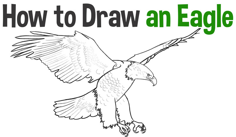Learn How to Draw an American Eagle Step by Step Drawing Tutorial for Beginners