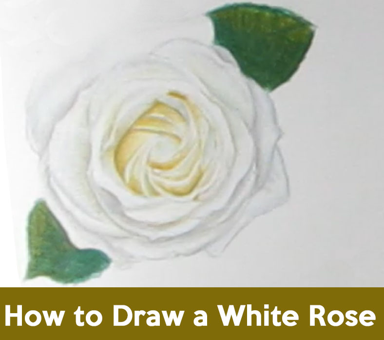 how to draw roses, drawing white roses