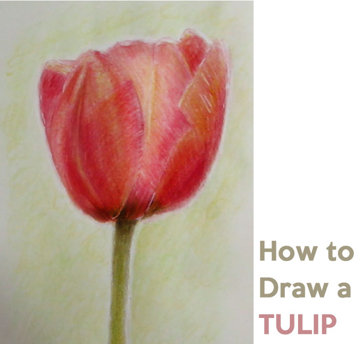 how to draw tulips step by step