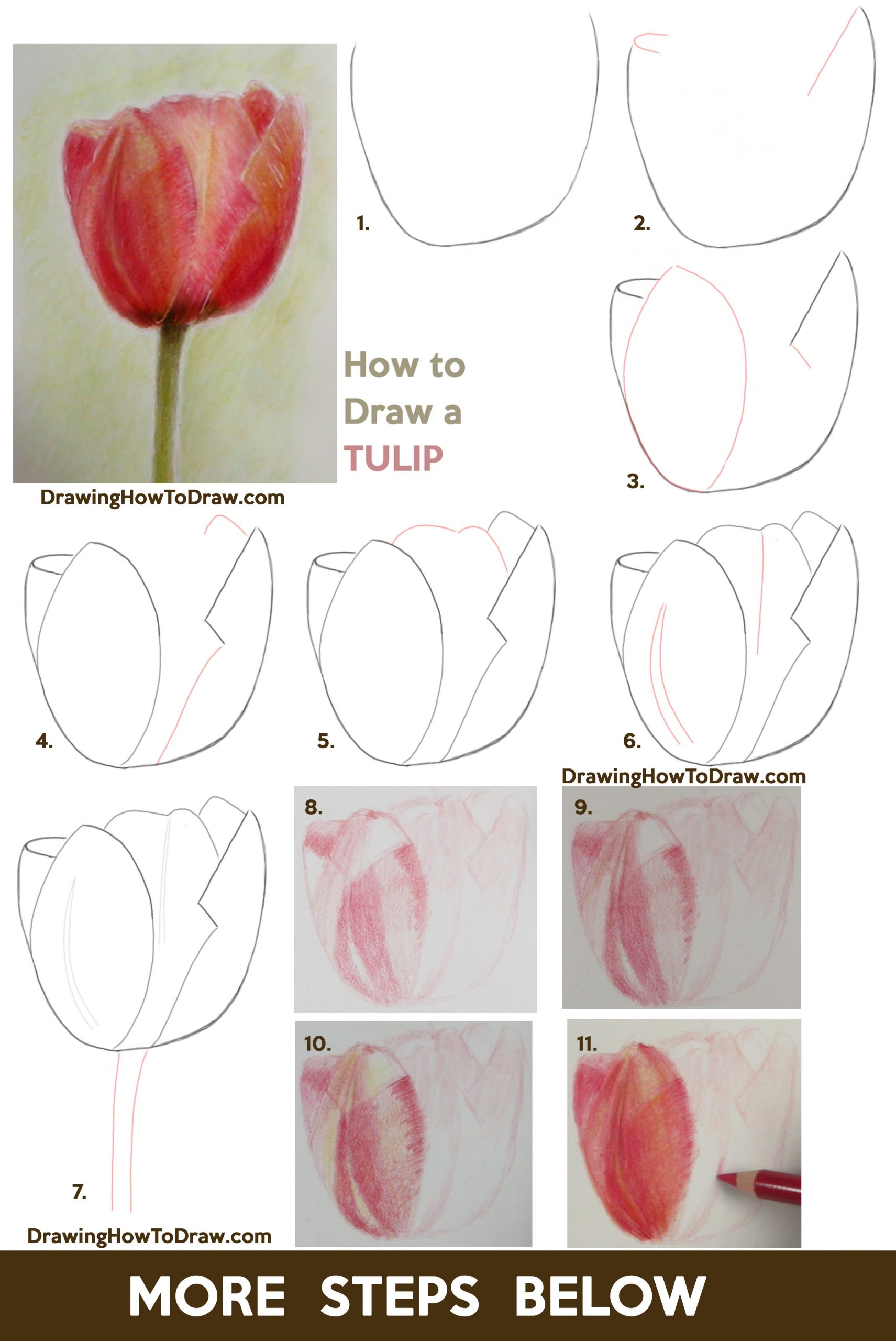 Learn How to Draw Tulips with Colored Pencils Easy Step by Step Drawing Tutorial