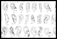 Take a look at this reference image of 50 different human ears.