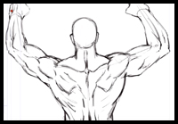 Drawing Anatomy : Study of the Human Back Muscles [Video]
