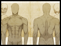 Male Anatomy : Front & Back Study