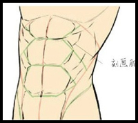 Drawing the Chest and Abs
