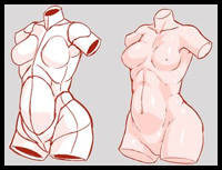 Drawing the Torso / Chest in 3D
