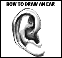 Learn How to Draw Ears and How to Shade Them : Drawing and Shading Ears Tutorial