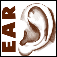 How to Draw Ears Side View with Easy Steps Lesson