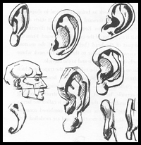 Here is a reference page on drawing the ears on a human head