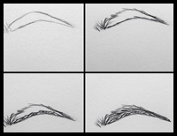 Step by Step, How to Draw Eye Brows