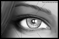 Learn How to Draw an Eye Brow and Eye Step by Step