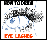 How to Draw Eye Lashes with Step by Step Illustrated Tutorial