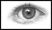 Drawing the Human Eyes