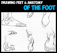 How to Draw the Foot : Drawing Feet and the Anatomy of them Tutorial