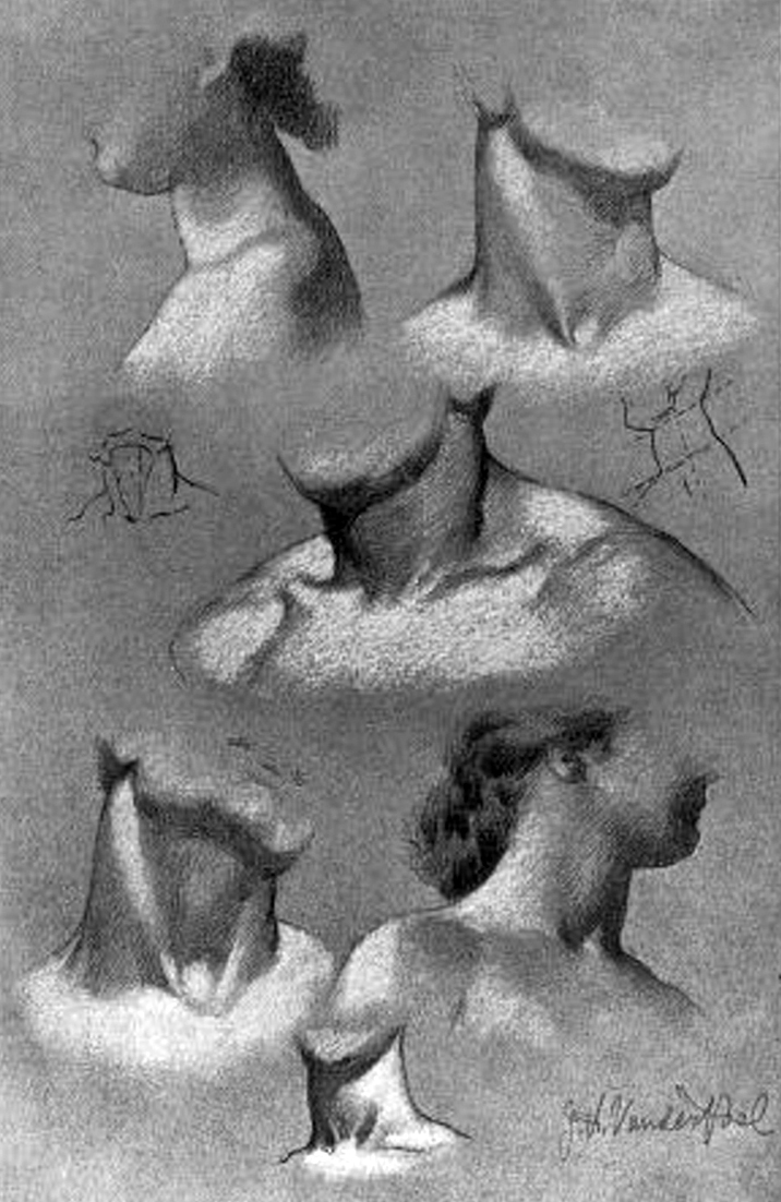 Drawing The Human Neck Throat And Shoulders With Anatomical
