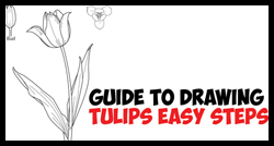 How to Draw Tulips – Easy Guide to Drawing Tulips from Side, From Above and as Young Buds