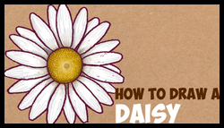How To Draw A Daisy Flower Step By Easy