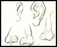 How To Draw A Nose And The Face Drawing Tutorials Drawing How To Draw Noses With Nose Drawing Lessons Step By Step Techniques