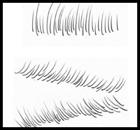 The Correct Way to Draw Eye Lashes