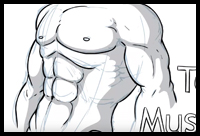 Create a beautiful male chest that is ripped