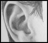 How to Draw a Realistic Ear : Step by Step Drawing Demonstration
