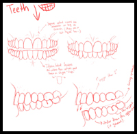 Upper and Lower Teeth Visual Reference