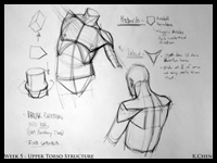 Instructional Demo Chest / Torso Reference Images